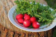 Todavía vida de verduras al aire libre Imagen de archivo