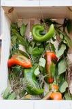 Todavía vida de verduras frescas y de especias en las esteras de la paja Imagen de archivo