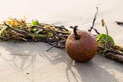 Todavía vida en el arena de mar Foto de archivo libre de regalías