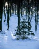 Todavía vida en el bosque del invierno foto de archivo libre de regalías