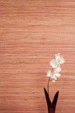Todavía vida en Japón 2 Fotografía de archivo libre de regalías