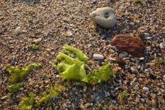 Todavía vida en la playa en luz de la salida del sol Imágenes de archivo libres de regalías