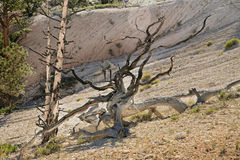 Todavía vida en parque nacional del barranco de Bryce Fotos de archivo