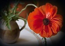 Todavía vida, flor anaranjada de la amapola Imagen de archivo