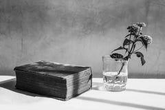 Todavía vida - Naturaleza Muerta Imagen de archivo libre de regalías