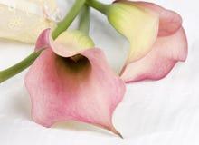 Todavía vida con las flores rosadas Foto de archivo