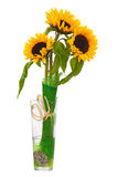 Todavía vida con los girasoles en el florero de cristal aislado en blanco Fotos de archivo libres de regalías