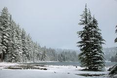 Todd lake in a snowy day on June Royalty Free Stock Photos
