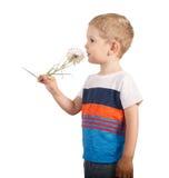 Toddle boy holding giant Dandelion. isolated on white. Blond boy holding giant Dandelion. isolated on white Royalty Free Stock Photos