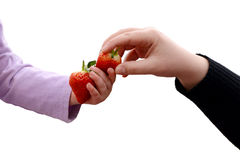 Toddler and adult sharing two fresh strawberries Stock Photography
