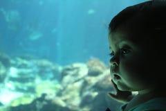 Toddler Aquarium Exploration. Photo was taken in Okinawa, Japan 2010. Photo of a toddler girl looking into an aquarium. MR406044 stock image
