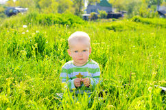Toddler baby on summer grass background Stock Image