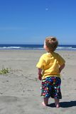 Toddler at the beach. Small child has fun at the beach royalty free stock photo