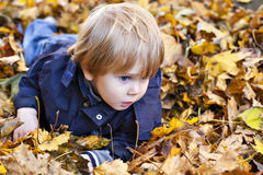 Toddler blond boy with blue eyes lays on bed of autumn fallen le Royalty Free Stock Image