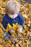 Toddler blond boy with blue eyes. Stands on bed of autumn fallen foliage with maple leaves in hands Stock Photos
