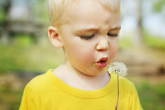 Toddler blowing dandelion Royalty Free Stock Images