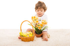 Toddler boy arrange narcissus in pot Royalty Free Stock Photo