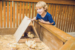 Toddler boy caresses and playing with Ducklings in the petting z stock image