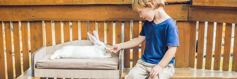 Toddler boy caresses and playing with rabbit in the petting zoo. concept of sustainability, love of nature, respect for the world