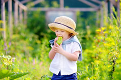 Toddler boy eating fresh cucumber in domestic garden Stock Images