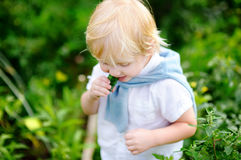 Toddler boy eating fresh cucumber in garden Royalty Free Stock Photography