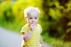 Toddler boy eating piece of bread Royalty Free Stock Image