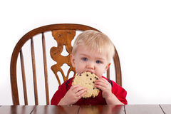 Toddler Boy Eats Cookie Stock Photos