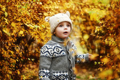 Toddler boy and golden fall Royalty Free Stock Photos
