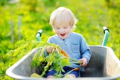 Toddler boy having fun in a wheelbarrow Stock Photos