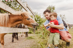 Toddler boy and his father feeding a pony at farm Royalty Free Stock Photo