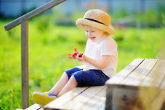 Toddler boy looking on his harvest on raspberry farm Royalty Free Stock Image