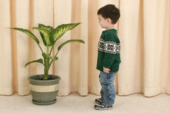 Toddler Boy Looking At Plant Royalty Free Stock Photos
