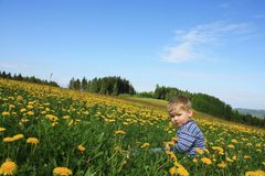 Toddler boy on the meadow stock photos