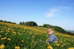 Toddler boy on the meadow Stock Photos