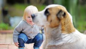 Toddler boy playing with dog. Toddler boy playing with big dog outdoors Royalty Free Stock Photography
