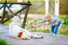 Toddler boy playing with dog. Toddler boy playing with big dog outdoors Royalty Free Stock Image