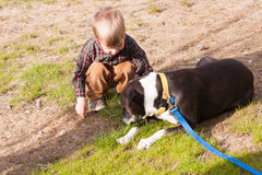 Toddler boy playing with a dog Stock Photos