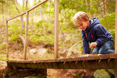 Toddler boy playing on a wooden bridge in a forest Stock Images