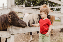Toddler boy pointing his finger at pony horse
