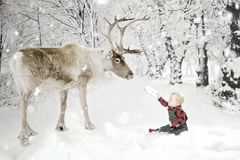 Toddler boy with Reindeer in snow. A toddler hands a letter for santa to a reindeer in the winter storm royalty free stock images