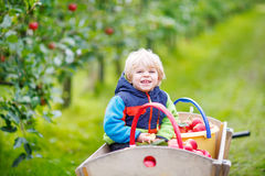 Toddler boy sitting in wooden trolley with red apples Royalty Free Stock Photography