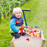 Toddler boy sitting in wooden trolley with red apples Stock Photos