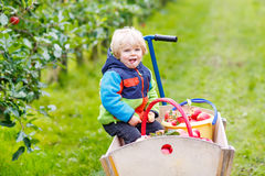 Toddler boy sitting in wooden trolley with red apples Royalty Free Stock Photo