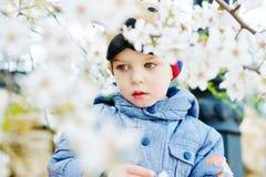 Toddler boy in spring Royalty Free Stock Photo