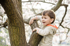 Toddler boy in spring time near the blossom tree. Portrait of smiling father giving his son piggyback ride outdoors against spring or summer forest or park royalty free stock photography