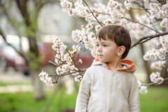 Toddler boy in spring time near the blossom tree. Portrait of smiling father giving his son piggyback ride outdoors against spring or summer forest or park stock images