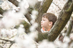 Toddler boy in spring time near the blossom tree. Portrait of smiling father giving his son piggyback ride outdoors against spring or summer forest or park royalty free stock images
