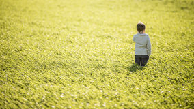 Toddler boy standing in the middle of high green grass Royalty Free Stock Image