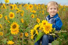 Toddler boy in sunflower field Stock Photos