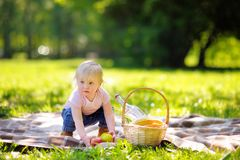 Toddler boy in sunny park Stock Photography